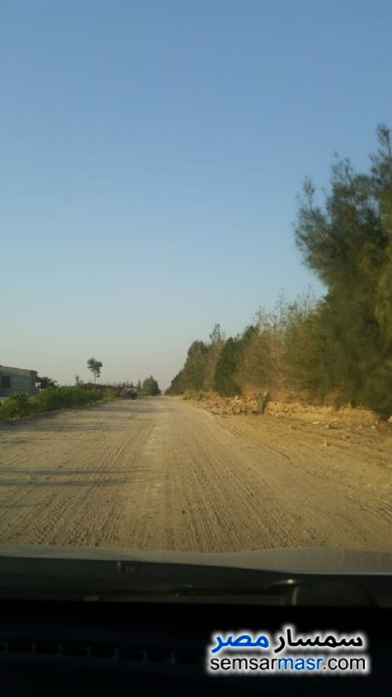 Photo 2 - Farm 78 acre For Sale Tamiya Fayyum